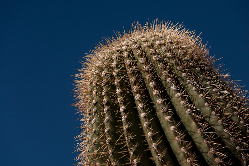 Cactus up close and personal