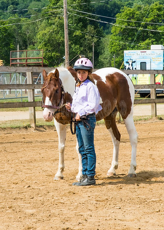 Horse and Pony Judging Show-Halter classes-8-17-17