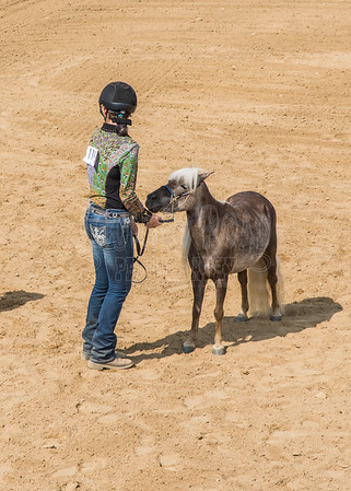 McKean County Fair Horse and Pony Judging-8 17 17-5611