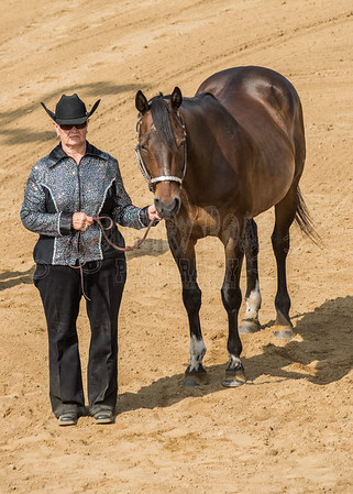 McKean County Fair Horse and Pony Judging-8 17 17-5589