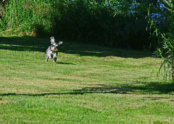 McNary NWFR (Burbank, Umatilla) and a McDonald Road Osprey, 5-19-16
