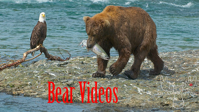 18 Minute HD Bear Video