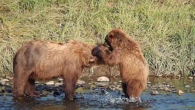 Jennie's Bears