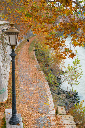 Tiber shore