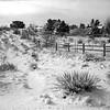 Prairie Style Back Yards