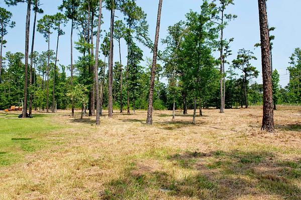 Plantation Palms Pond n Yard