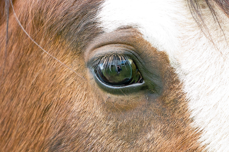 Horse eye view