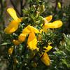 Vibrant in yellow