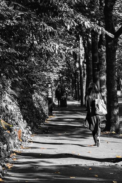 Autumn Shadows.jpg