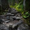 The Ammonoosuc Trail