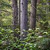 Vernal Forest