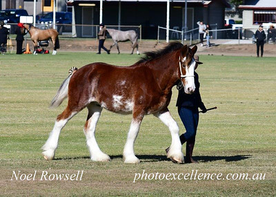 Action from the 2021 Blacktown Horse Show Western News 25th June, 2021