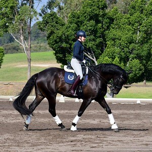 Warming up for Dressage at the CD-Lite event at the Sydney International Equestrian Centre from April 27-May 1. Nepean News - Digital Edition 7th May, 2021