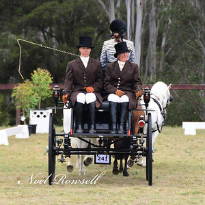 Action from the 20th International Welsh Show Australia 2019 at the SIEC Nepean News 19th December, 2019