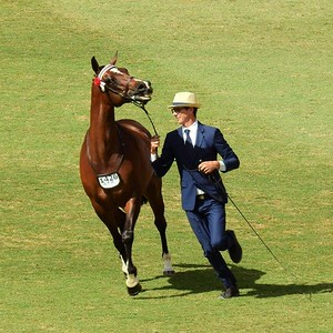 Equestrian Action One of the 10 images from the 2021 Royal Easter Show Montage Nepean News 16th April, 2021