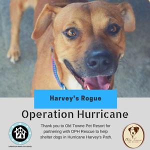 HarveysRogue