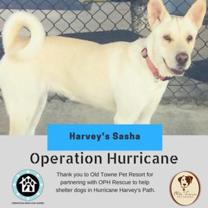 HarveysSasha