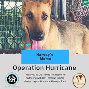 HarveysMama