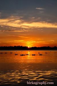 Ducks enjoying a beautiful sunset on Medicine Lake, MN