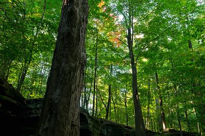 Early Autumn Color, Princess Ledges County Park, 2015.