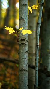 Autumn Color, Lake Medina County Park, 2015.