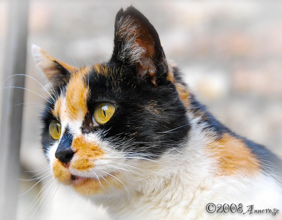 Katze in Assisi