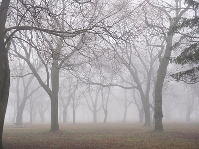 Trees In Fog, Coronation Park