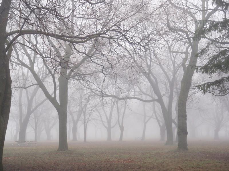 Trees In Fog, Coronation Park