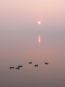 Ducks at Dawn (submitted to Photoblogs Magazine)