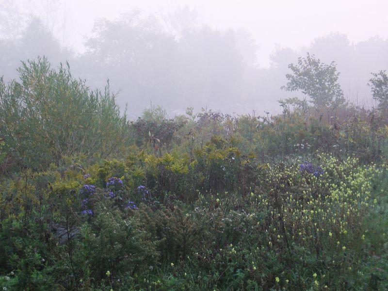 Misty Morning Wildflowers