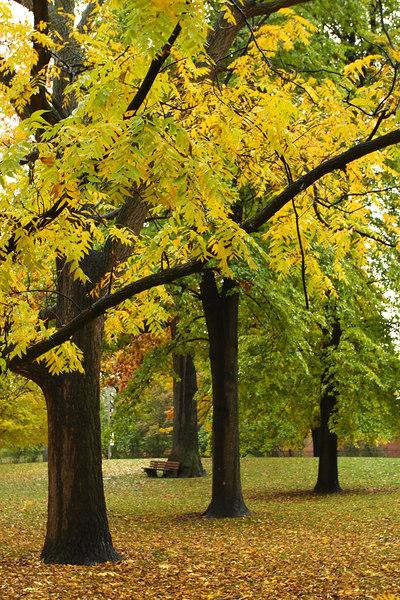 Trees in Queen's Park