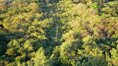 Rainforest -- St. Lucia (APS Film Scan)