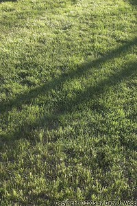 Grass and Shadows