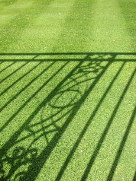 Shadows and Grass