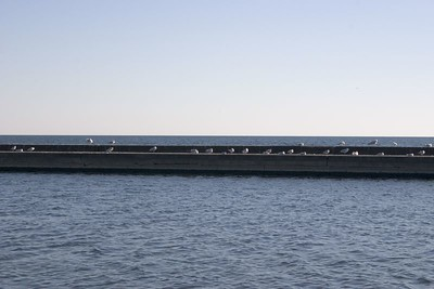 Seagulls on the Breakwater -- Toronto