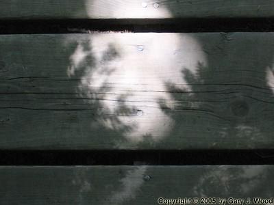 Leafy shadows