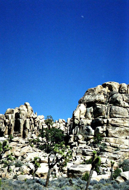 Tree, Rocks, Moon -- Joshua Tree Park, CA