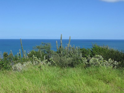 Seaside cliff with cacti, Margarita Island