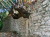 Tree-trunk-growning-through-ancient-wall,-Butrint,-Albania