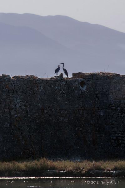 Herons,-Ali-Pasha-castle,-Vivari-Channel,-Butrint,-Albania
