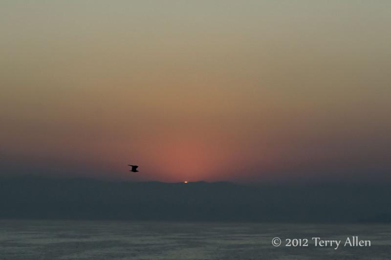 Sunrise-with-seabird,-near-Dubrovnik,-Croatia