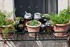 Plants-&-preserves,-window-ledge,-Dubrovnik,-Croatia