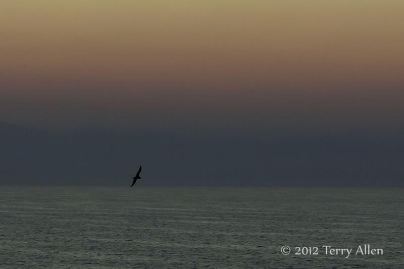 Pre-dawn-seabird,-near-Dubrovnik,-Croatia