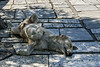 Dog-sleeping-in-the-shade,-Athens,-Greece