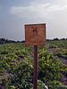Grillo-Wline,-Fondazione-Whitaker,-Mozia-Island,-Sicily