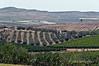 Vineyards-&-olive-groves,-Caltanisetta,-Sicily