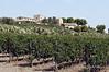 Feudo-di-Principo-Butera-Winery,-Caltanisetta,-Sicily