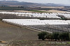 Greenhouses,-Caltanisetta-Province,-Sicily