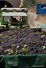 Truck-full-of-Nero-d'Avola-grapes,-Caltanisetta,-Sicily