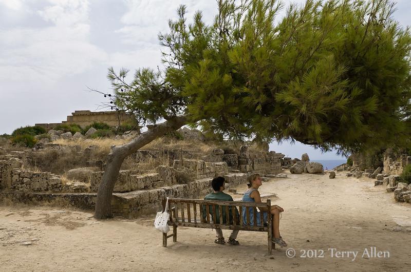 Ancient-road-&-Aleppo-pine,-Acropolis,-Selinute,-Sicily